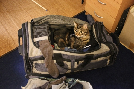 The cat wanted to go with us